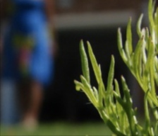 close up of weed with girl in blue dress in backgrund
